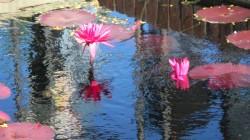 chgo botanic garden 9-10 043