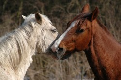 Horse lovers